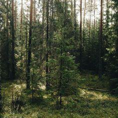 I have many many photos everyday, so I decided to create a tumblr-blog:) liskindol, as always!Каждый день получается огромное количество фотографий, так что я решила не прятать их, теперь больше моих фотографий будет на liskindol.tumblr.com. . #vscocam #vsco #landscape #forest #wood #summer #August #fairytale #liveadventure #liveautentic #livefolk #folk #adventure #travel #nature #wild