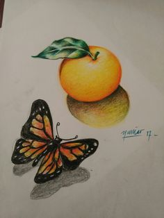 lemon and butterfly