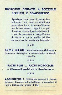 Treviso - Premiato Stabilimento Bacologico - Non Viaggiata 2