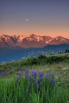 Sunrise Moonset from Hurricane Ridge [By Jeffrey Sullivan, via Flickr].