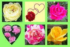 Roses et cœurs pour une Maman