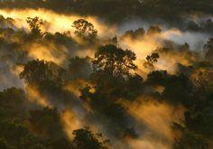 12 forêts absolument majestueuses qui font la beauté de la France | Daily Geek Show Amérique du Sud, plus particulièrement sur la Guyane française. forêt amazonienne