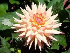 Mary Jo: Semi-Cactus, M-SC,PK