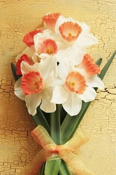 Narcissus- Self-love.  (Many people are in love with themselves which means they are narcissistic. (Excessive self love)