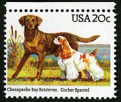 Cheasapeake Bay Retriever & Cocker Spaniel on a 1984 Dogs issue stamp.