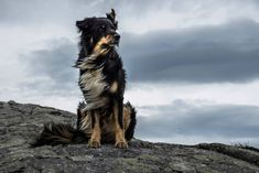 Possible the most majestic dog photo I have ever come across