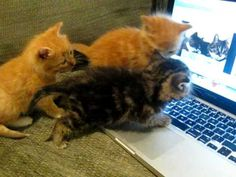 Delightful! Three Kittens Talking to Cats on the Computer