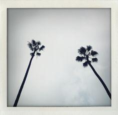 Palm trees by Douglas Friedman