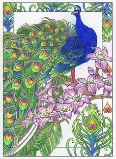 peacock from creative haven peacock designs coloring book - Peacock Coloring Book