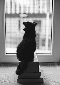 Majestic Black and White Photographs Perfectly Capture the Life of a Cat