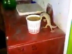 Di dalam video terlihat seekor cecak yang berdiri dengan dua kakinya bersandar ke gelas. Sedangkan kedua kaki lainnya terlihat mengangkang.
