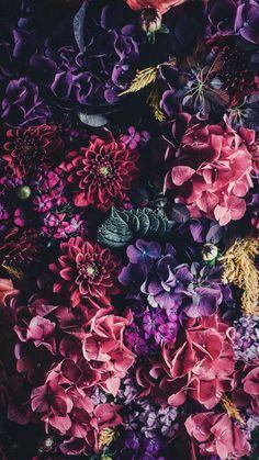 Flor Iphone Wallpaper, Flowery Wallpaper, Colorful Wallpaper, Aesthetic Iphone Wallpaper, Nature Wallpaper, Wallpaper Backgrounds, Aesthetic Wallpapers, Beautiful Flowers Wallpapers, Pretty Wallpapers