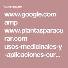 www.google.com amp www.plantasparacurar.com usos-medicinales-y-aplicaciones-curativas-de-la-bardana amp