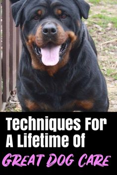 Do You Own Your pet dog? This Is For You * Click image to read more details. Pet Dogs, Dogs And Puppies, Pets, Dog Care Tips, Pet Care, Odor Remover, Loose Hairstyles, Dog Training Tips, Your Pet