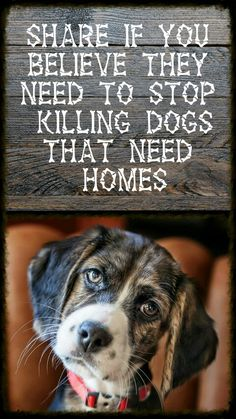 STOP THE KILLING!!!!! Stop the irresponsible breeding so we can halt the misery, starvation, pain and early deaths.