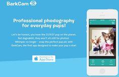 BarkCam For Dogs To Take Cool Selfies!  http://techmash.co.uk/2014/07/18/barkcam-for-dogs-to-take-cool-selfies/  #BarkCam #Selfies