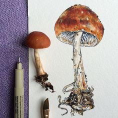 ☀chicagoqizza☀ Mushroom Drawing, Mushroom Art, Art Sketches, Art Drawings, Psychedelic Art, Art Sketchbook, Botanical Art, Art Inspo, Art Reference