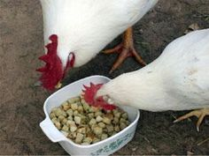 Stuffed Birds...Howie and Ilene enjoy a little stuffing | Living the Country Life
