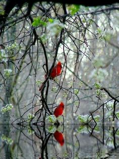 Red Cardinals, one of the birds in the garden, Pretty Birds, Love Birds, Beautiful Birds, Animals Beautiful, Cute Animals, Simply Beautiful, Beautiful Things, Beautiful Pictures, Cardinal Birds