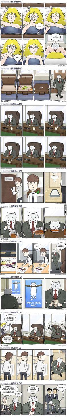 Business Cat Compilation! - #funny, #lol, #humor, #jokes, #pics, #pictures, #GagsBox, #comics,