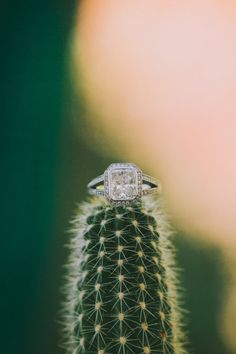 ring shot idea (cactus) - La Quinta Wedding from Fondly Forever Photography