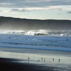 Seabirds on a Whitby Beach