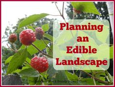Use your front and back yards for producing food by planning an edible landscape. It will benefit you and your family for many years to come.