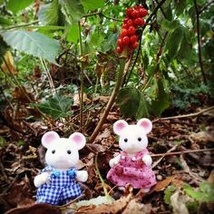 """""""Bryce and Laurel Hawthorn love learning about the wildlife around them!"""" Another lovely entry from Instagram user @MissSylvanian #SylvanianSummer #SylvanianFamilies"""
