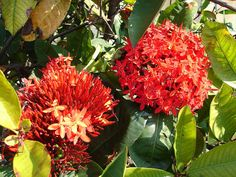 """flore tropicale  