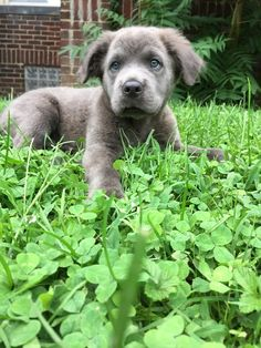 This puppy in a bed of clovers wouldn't be filling hearts with joy if joy wasn't real.   21 Dogs Who Will Make You Believe In Happiness