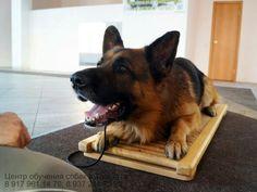 Хорошего Вам дня и чудесного настроения!😊🐕🐾 #собака #собаки #dog #Тольятти #щенок #puppy #tlt #собакиТольятти #собаки_тольятти #followme #кинолог #dogtraining #люблюсвоюработу #люблюсвоюсобаку #тлт #лучший #лучшие #собакадруг #собакадругчеловека #доброеутро #goodmorning #настроение #питомец #любимец #любимка #хорошеенастроение #joy #удачи #хорошегодня #немецкаяовчарка Follow me for more dog posts!