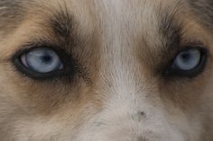 p alega hammond stop abuse of greenland sled dogs