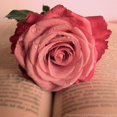 Pink rose and book by =FrancescaDelfino on deviantART