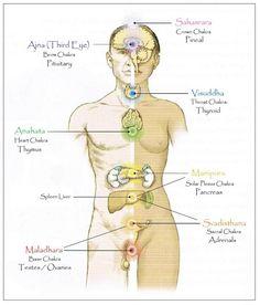 Endocrine Glands Chakra system