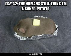 Who would leave a baked potato around for 42 days? Does this health issue not concern anyone else?