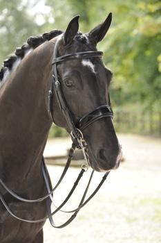 Hopefully a double bridle is in Gadget's future -- love this patent noseband.