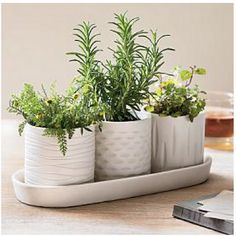 Window Sill Herb Pots