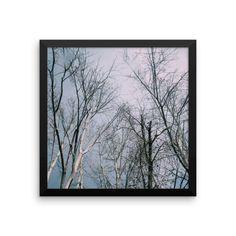 Framed Poster - Autumn Trees