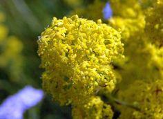 Tratamente si remedii naturiste Seeds, Mai, Food, Plant, Essen, Meals, Yemek, Eten
