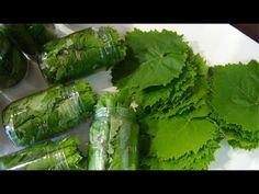Recipe Boards, Greek Recipes, Fresh Rolls, Celery, Asparagus, Sweets, Canning, Vegetables, Fruit