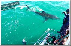 O mergulho com tubarao branco em Cape Town é um dos mais famosos do mundo, pois os tubarões branco são muito frequentes por lá. O mergulho é bastante seguro, pois é feito dentro de uma gaiola anexa ao barco, com profissionais que tomam todo o cuidado para a atração continuar sem acidentes. Caso ocorra, existe um acordo com o governo para acabar com o passeio.