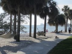 Recalling my visit to beautiful Eckerd College in St Petersburg. Thinking of all the folks on the Tampa Bay tonight. Eckerd College, College Ready, Pictures Of Beautiful Places, Beautiful Things, Universities In Florida, Florida Sunshine, Petersburg Florida, Marine Biology, Sharks