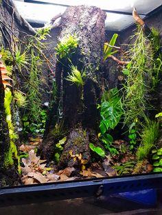 Gecko Terrarium, Terrarium Reptile, Garden Terrarium, Reptile Habitat, Reptile Cage, Crested Gecko Habitat, Tropical Terrariums, Snake Cages, Vegetable Gardening