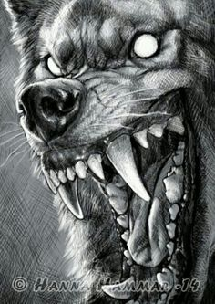گرگ وحشی wolf Wolves