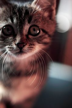 .What a gorgeous kitty!