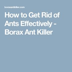 How to Get Rid of Ants Effectively - Borax Ant Killer Borax To Kill Ants, Borax For Ants, Get Rid Of Ants, How To Get Rid Of Acne, Natural Bug Killer, Queen Ant, Ant Spray, Ant Colony, Homemade Cleaning Products