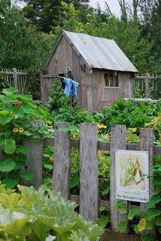 Mr. McGregor's potting shed and vegetable garden..