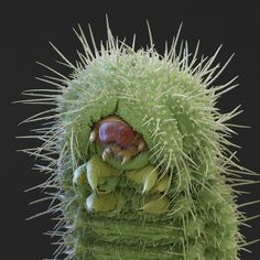 This Halloween, forget about the bogeyman in the cupboard or the monster under the bed. These creepy crawlies really might be in your house (or nearby, at least), so enjoy these coloured scanning electron micrograph portraits ... if you dare.