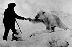 Un hombre alimenta osos polares con leche, 1970, Rusia,