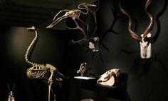 """Museum d'histoire naturelle de Bayonne : """"Histoire d'Os"""", une exposition 100% calcium"""